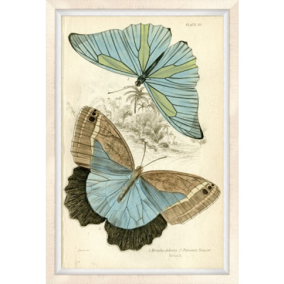 Oversized Brazilian Butterfly 1