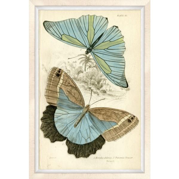 Oversized Brazilian Butterfly 1